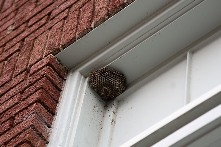 We provide a wasp nest removal service for domestic and commercial properties in Golders Green.